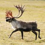 Seasonal Adjustments for Subsistence