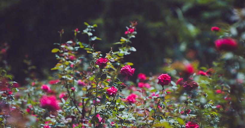golap-gram-rose-village-birulia-savar-dhaka-07