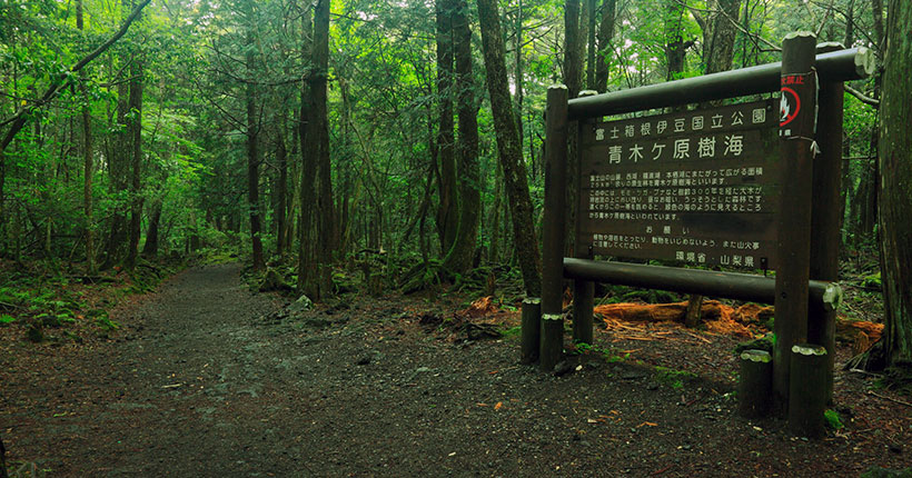 aokigahara-suicide-forest-01