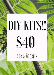 DIY Kits Kokedama, A Dash of Green
