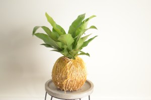 Kokedama, A Dash of Green, Moss Ball, Tamworth NSW,