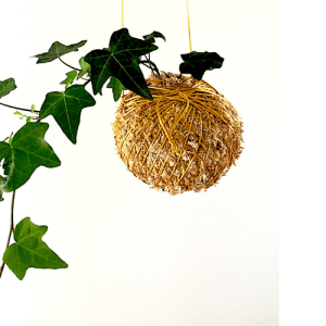 Ivy Kokedama, A Dash of Green,