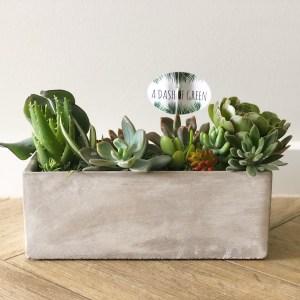succulents, concrete planters