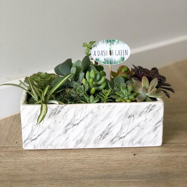 Marble planter, succulents, pots, planters