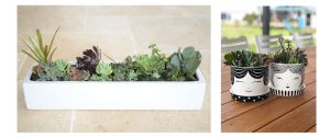 pots, planters, succulents, a Dash of Green