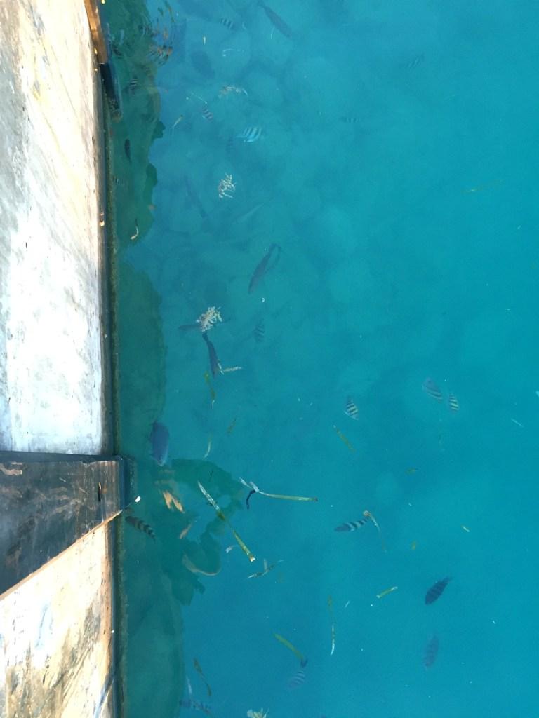 Mallory Fish - ADOS