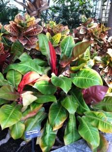 Even foliage can take my breath away.