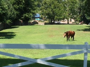 Horses still reside at Graceland. They wear eye masks as a safety precaution.