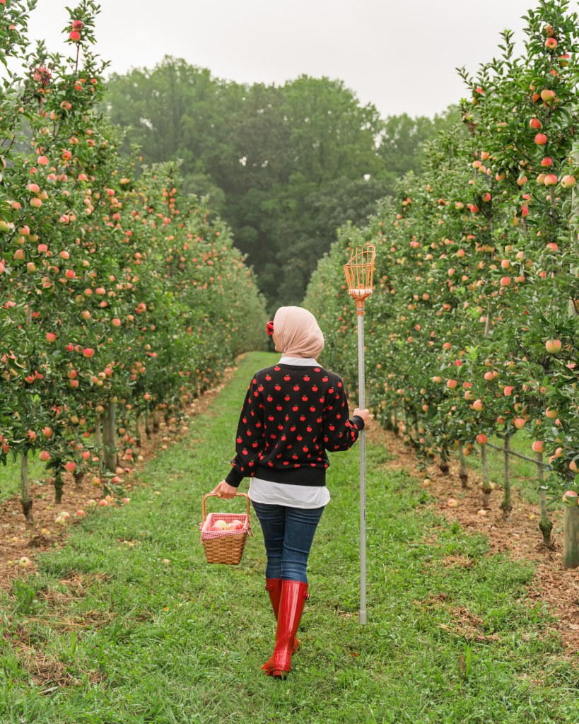 Kate Spade apple toss jacquard sweater-hunter red boots-spanx denim-haute hijab-apple picking-DC blogger-Baugher's Orchard-Maryland-Fall Things To Do