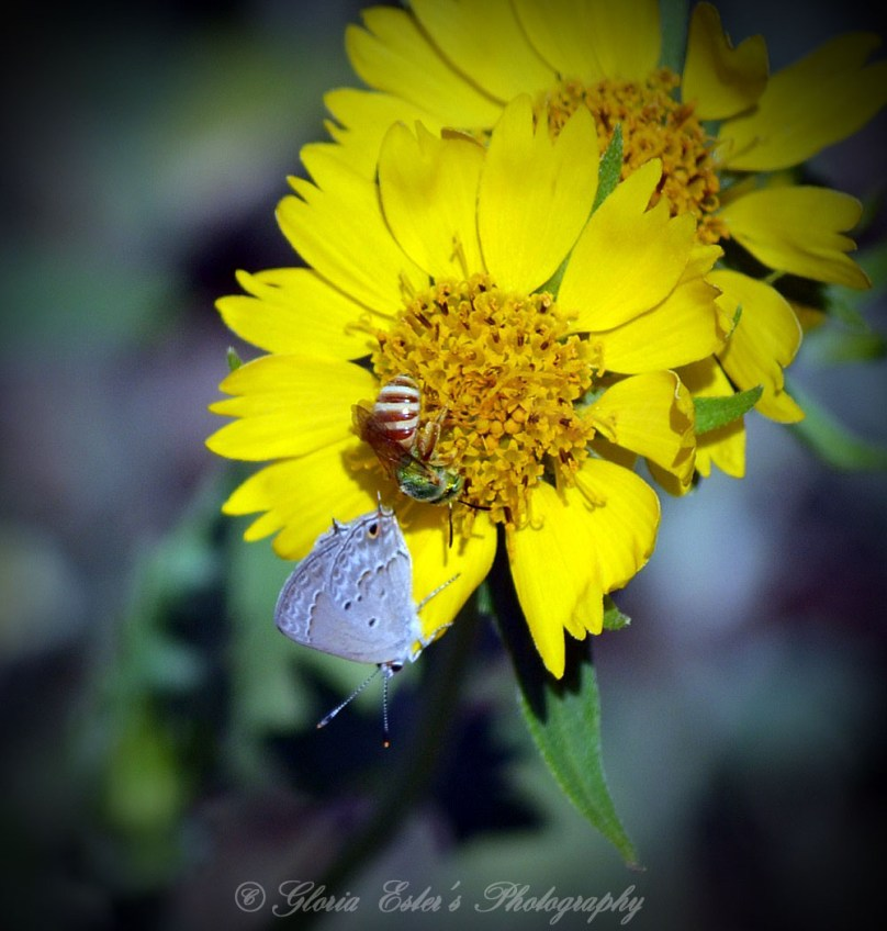 Bee and butterfly sharing a flower.