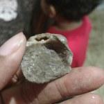 Paleo Dig Payson Arizona