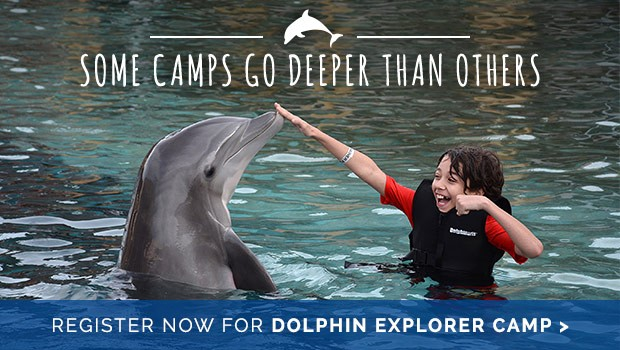 Dolphinaris: An Exciting opportunity to meet dolphins in real life