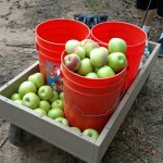Apple Orchards, Farms, Corn Mazes