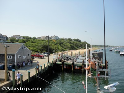 A Big, Cape Cod Summer Update
