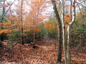 Skyline trail at Blue Hills Reservation can be challenging