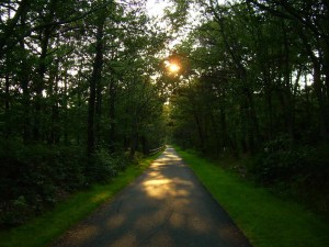 Cape Cod Rail Trail offers great hiking in Massachusetts with over 22 miles of trails.