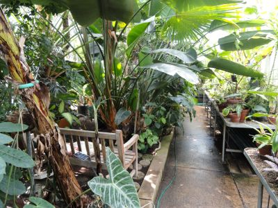 Margaret C Ferguson Greenhouses, date night ideas Boston