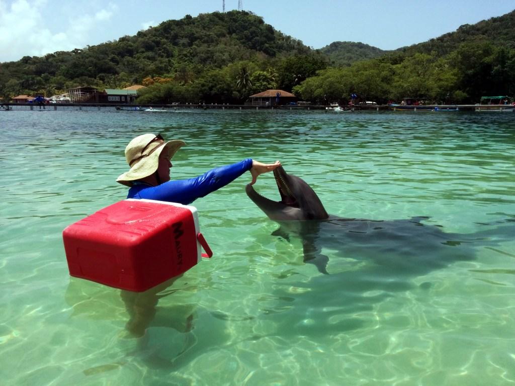 dolphins in hondorus
