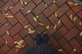 ใบไม้เปลี่ยนสีที่โซล