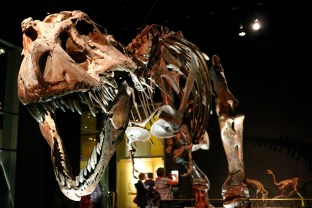 T-Rex at Royal Tyrrell Museum of Palaeontology.