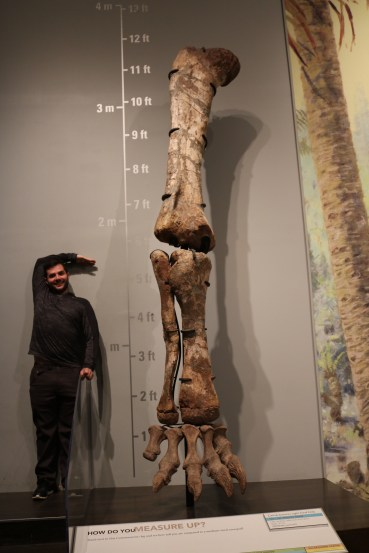 Adam measuring up next to the leg bones of a dinosaur at Royal Tyrrell Museum of Palaeontology.