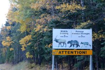 Wildlife crossing sign in Banff National Park.