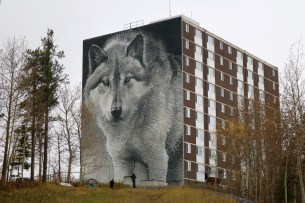 "Canada's largest ""photo-real"" mural of a wolf on the side of an apartment building in Thompson, Manitoba."