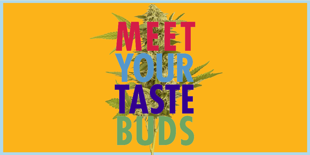 7ACRES Meet Your Tastebuds Campaign