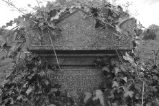 Headstone and ivy. Southern Necropolis, Glasgow