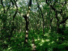 Woods, Coleridge Way