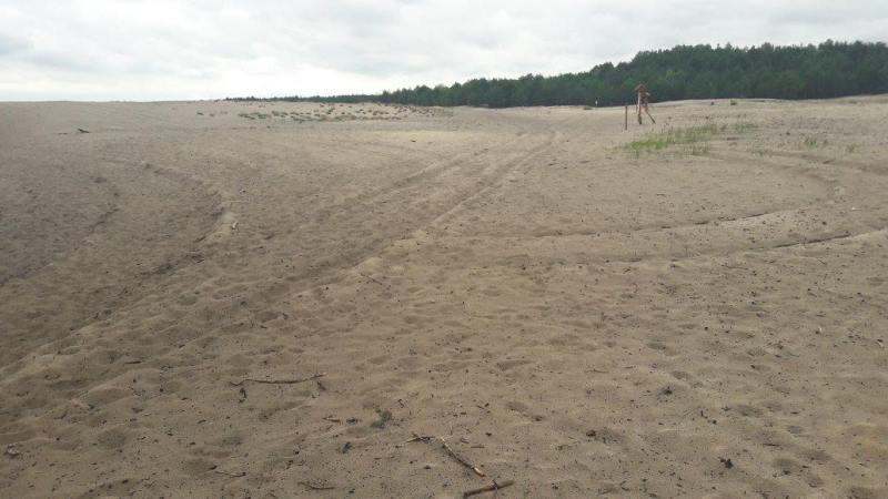 Woestijn - Zand - Natuur - Bos - Polen - Hiken - Wandelen