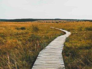 Wandelen in de omgeving van Malmedy - Hoge venen
