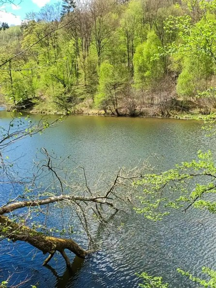 Wandeling Lac Des Deux Ourthes