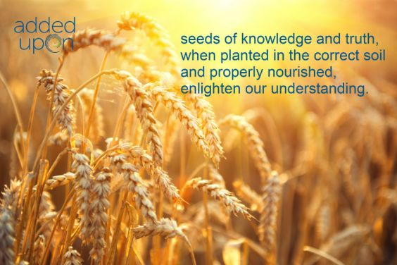 law of the harvest and spiritual intelligence