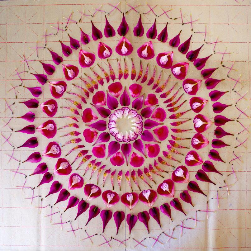 danmala544carnation-alstroemeria-godetia