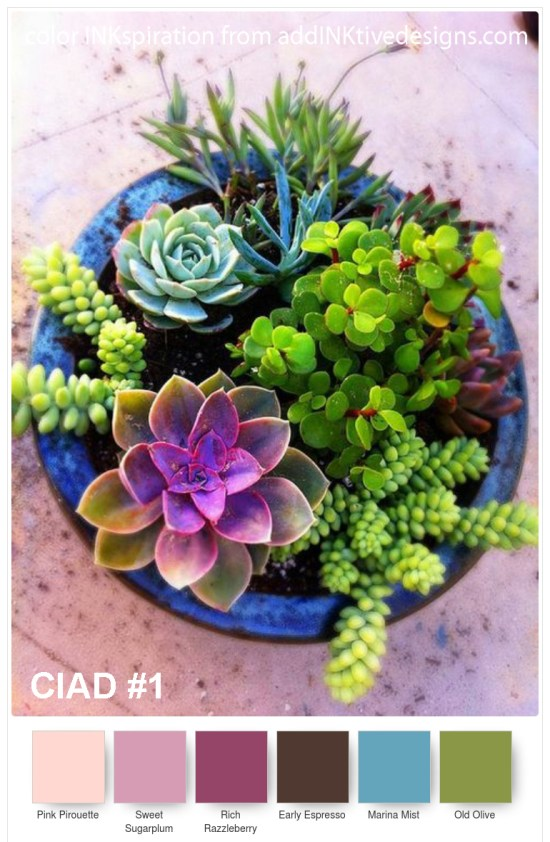 ciad1