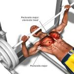 How To Add Muscle Mass Onto Your Chest