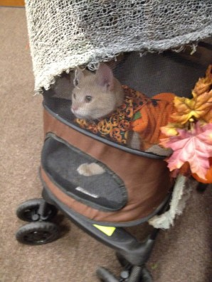 Simba as a pumpkin in a stroller decorated as a haunted pumpkin patch.