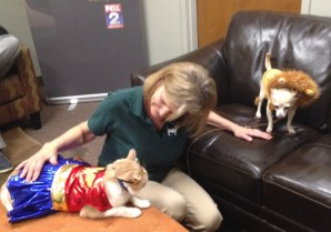 Addy Shattuck with Gus as Wonder Woman and Bambi as a lion.