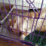 cat adoption 6