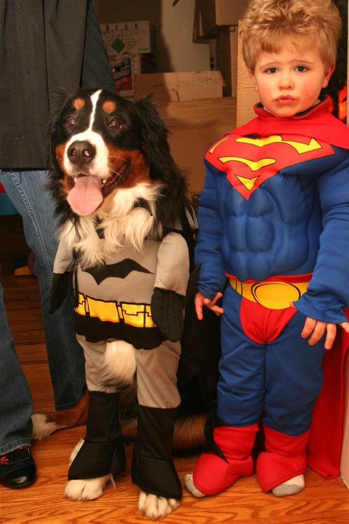 batdog and supercal...err...to the...mmm...rescue?