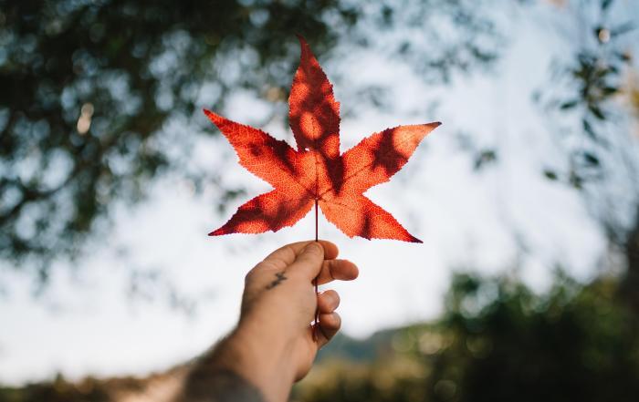 Maple on High