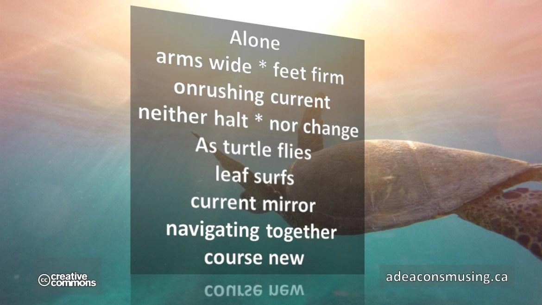 Turtle Flies