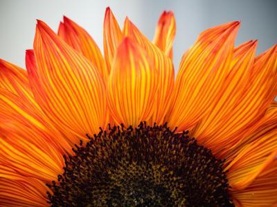Gratitude Blooms