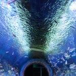 Rotterdam Via Aquarium