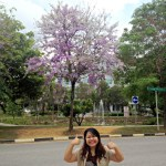 """Lovely """"Sakura"""" Blossoms in Singapore"""