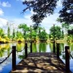 A Picnic @ Woodlands Resort
