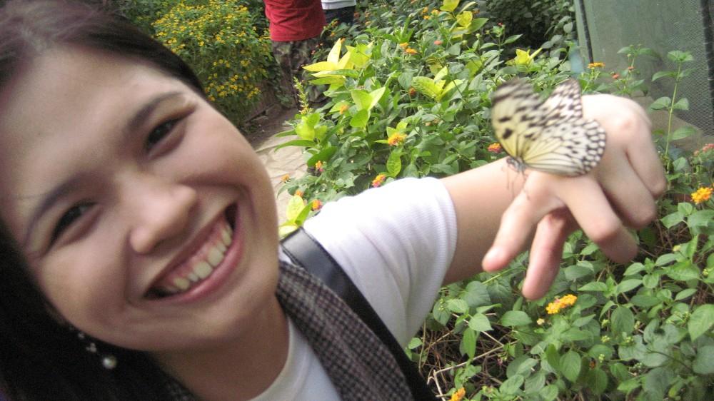 Vigan butterfly
