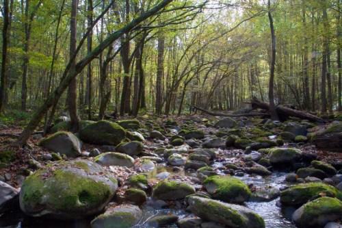 Stream near Little Pigeon River, Great Smoky Mountain National Park, Greenbrier, TN