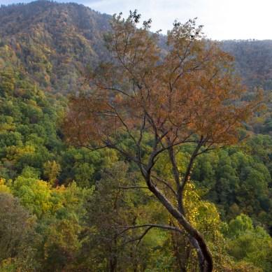 Overlook, Mountain, Great Smoky Mountains National Park, TN